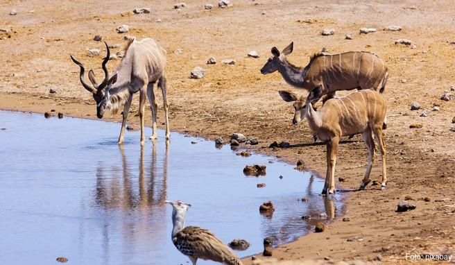 Namibia: Natur pur im Caprivi-Streifen