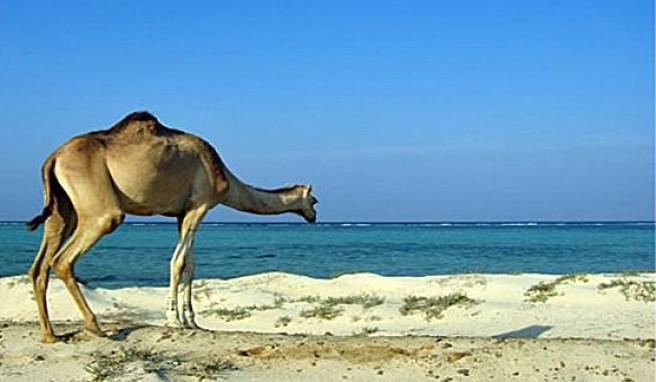 In Süd-Ägypten werden an der Küste des Roten Meers Wüste und Strand eins werden.