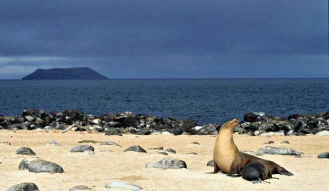 Die Galapagosinseln in Ecuador sind wahre Tierparadiese