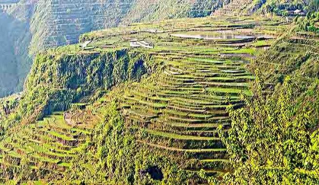 Grünes Land: Terrassenfelder in der Provinz Guizhou, China