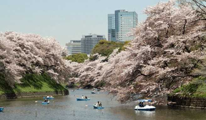 Japan-Highlights zwischen Hightech, Megacity und Tradition