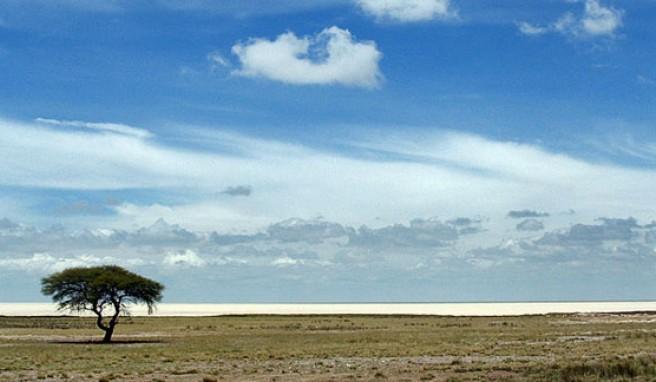 Unendliche Weite der Etosha Pfanne, Namibia
