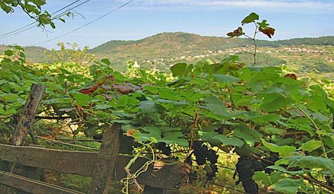 Reisen in Portugals Norden im Land des Vinho Verde