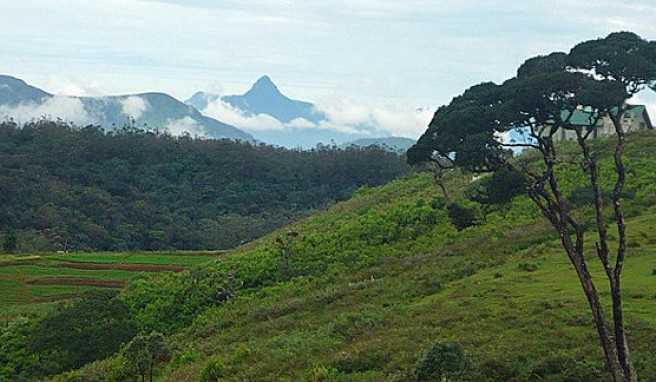 Bergwelt in Sri Lanka mit dem  Adam's Peak genannten Gipfel Sri Pada