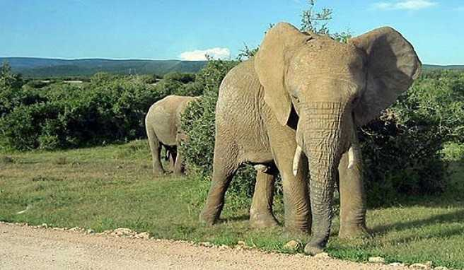 """Im Safariland Südafrika die """"Big Five"""" hautnah erleben"""