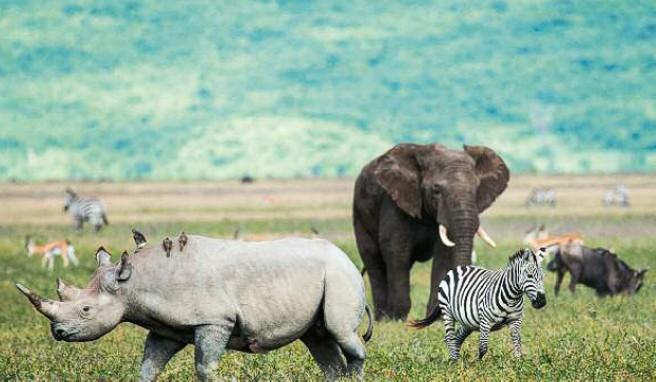 Dichte Wildtierpopulation