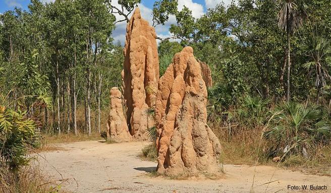 Termitenhügel im Litchfield-Nationalpark