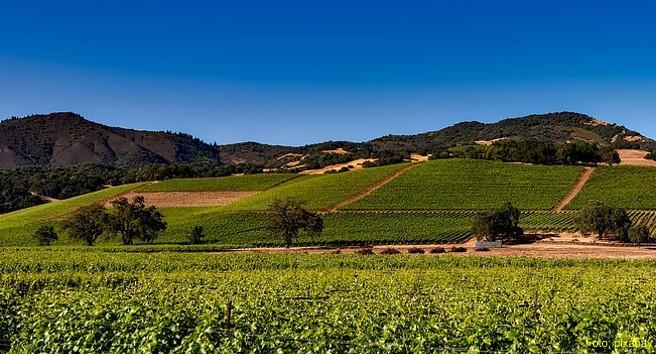 Rund 800 Weingüter und immer mehr Spitzenrestaurants locken Genießer nach Kalifornien – und nicht nur die