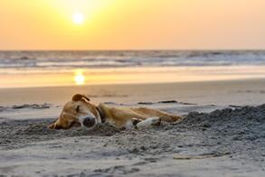 Der Vierbeiner kann sich im Urlaub am Strand erholen oder eine Massage im Hotel genießen