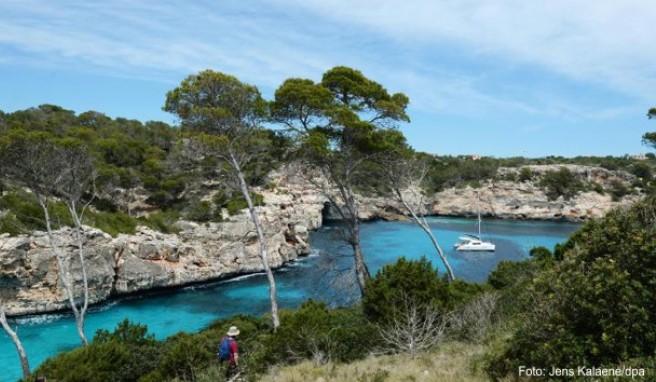 So schön die Pflanzen in der Bucht Calo des Moro auf Mallorca auch sind - es ist nicht erlaubt, Exemplare davon nach Deutschland einzuführen.