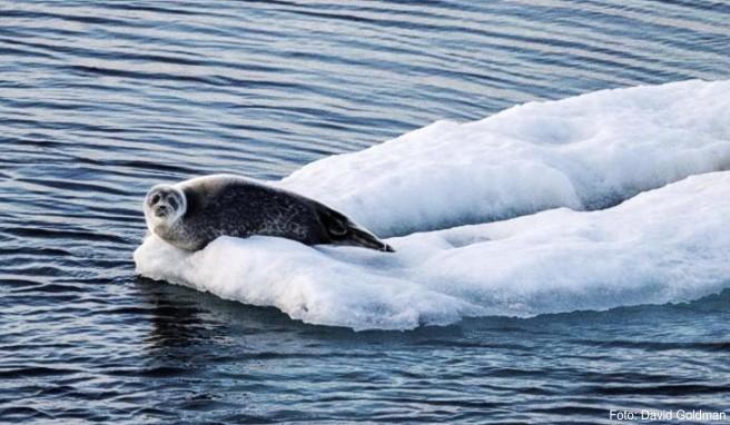 Werden auf einer Arktis-Kreuzfahrt mehrere versprochene Häfen in Grönland nicht angefahren, darf der Reisende nachträglich den Preis mindern