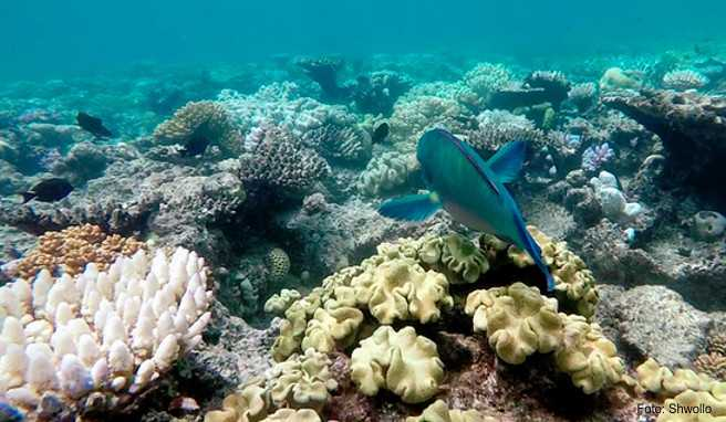 Australien, Great Barrier Reef
