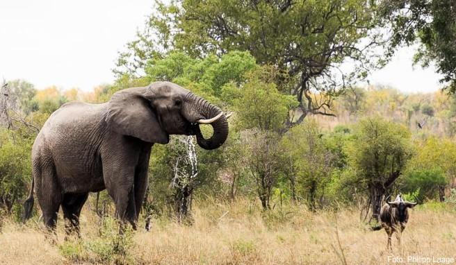 Nicht nur die Elefanten im Krüger-Nationalpark sind eine Touristenattraktion: Südafrika hat 2017 so viele Reisende aus Deutschland angelockt wie noch nie