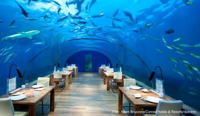 Speisen unter den Haien: Das »Conrad Rangali« mit seinem »Ithaa«-Restaurant war Vorreiter in Sachen Unterwasser-Restaurant