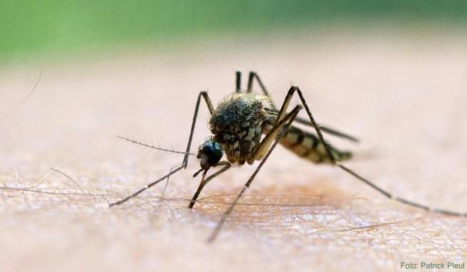 Die Gefahr, durch Mücken mit dem Zika-Virus infiziert zu werden, besteht in vielen Reiseländern. Wie hoch das Risiko ist, verdeutlichen die WHO-Kategorien