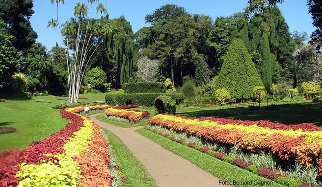 Der Peradeniya Botanical Garden wurde bereits 1824 von den Briten angelegt und gehörte zuvor zum Lustschloss des von ihnen abgesetzten Kandy-Königs