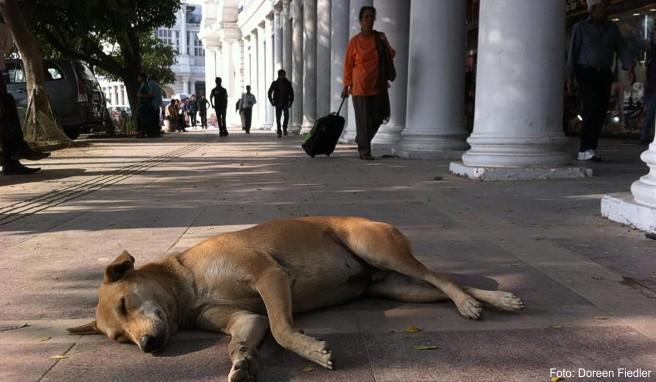 In Indien sterben besonders viele Menschen an Tollwut. Das Virus wird oft durch Straßenhunde übertragen