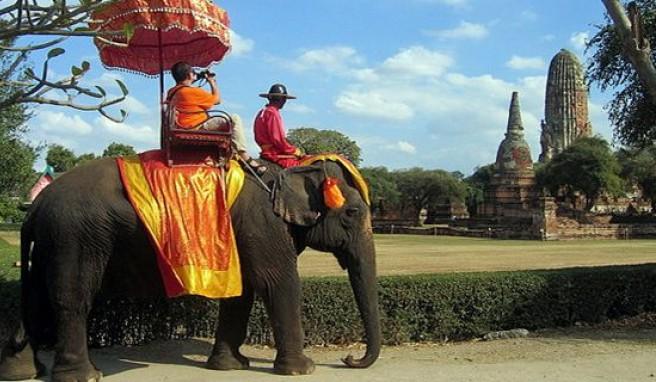 Ayutthaya: Mit dem Elefantentaxi zu den Tempeln. .