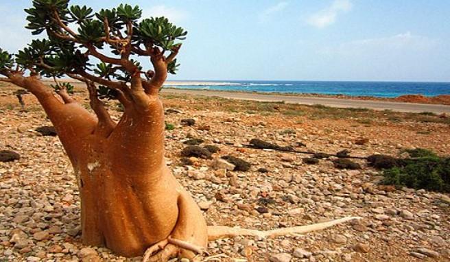 Sokotra Reisen Zur Insel Der Gluckseligen