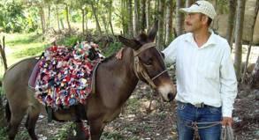 Mit dem Esel auf den höchsten Gipfel der Dominikanischen Republik.